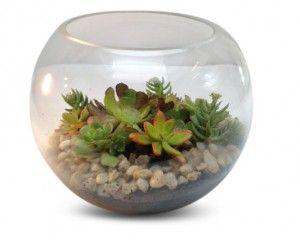 succulent-fishbowl-Terrarium